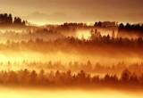 Falkenbach Wald