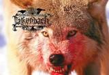 Falkenbach Wolf