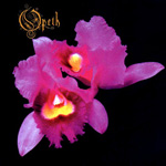 Opeth_Orchid